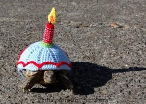 Cake for tortoises!