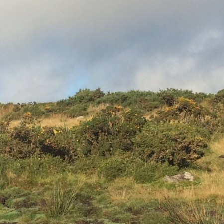 Close up of Dartmoor terrain - this photo taken just outside the gate of the farm.