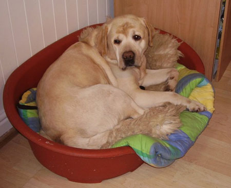 Digger in his bed