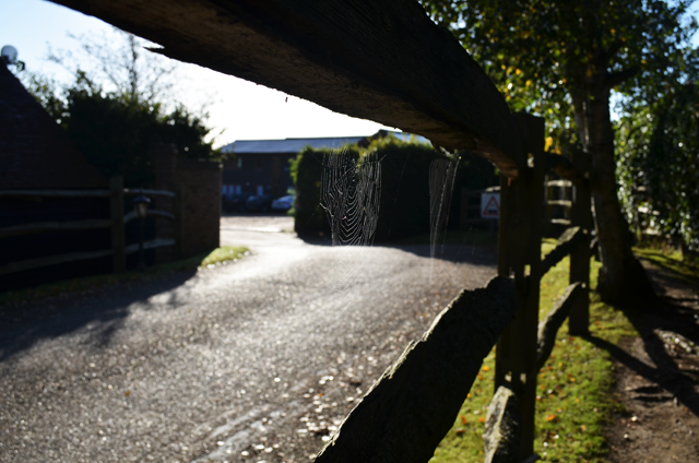 Cobwebs on the fences.