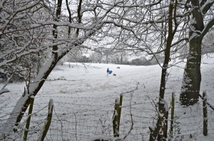Groups of people tobogganing in the fields bordering the woods.