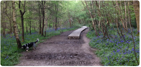 Muddy muddy muddy! Check out all the bluebells surrounding the walkways.