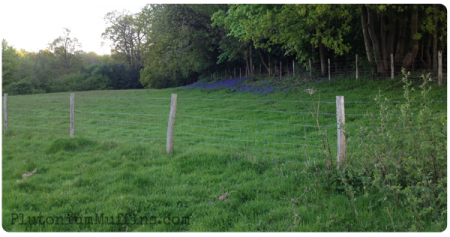 The first patch of bluebells.
