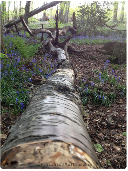 A fallen tree with bark and bluebells - picturesque!