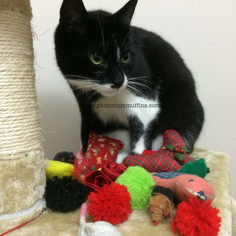 Tonks with all of her toys.