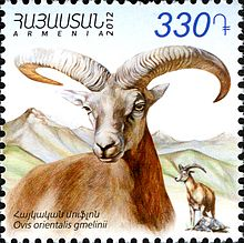 Armenian Mouflon (or Iranian Red Sheep) on a stamp.