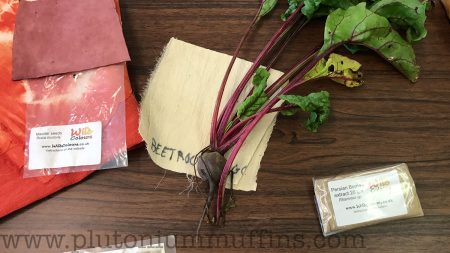 Beetroot is not a great dye stuff! From a talk by Teresinha Roberts of Wild Colours