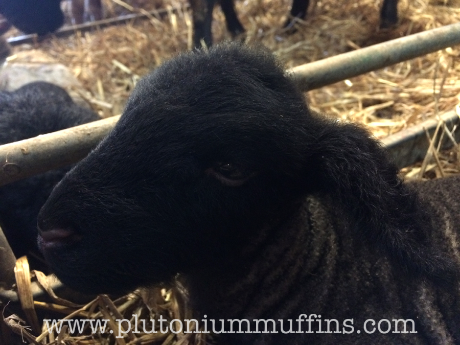 Black Whympstone Lamb.