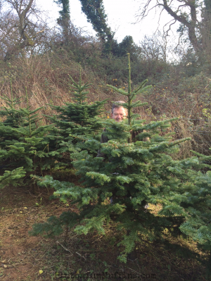 Dad hiding behind our Christmas tree before cutting it down.