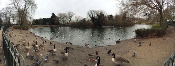 Duck pond at Finsbury Park.