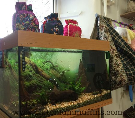 My new requirement for all yarn shops: a colourful fish tank for John to watch.