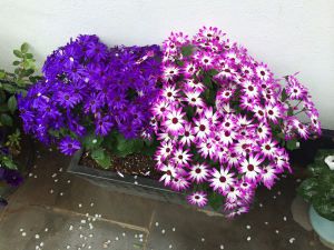 Another photo of purple and green flowers...can you tell I'm inspired?!