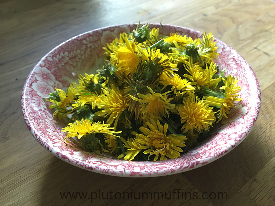 A bowl full of dandelions ready to be cooked for dye.