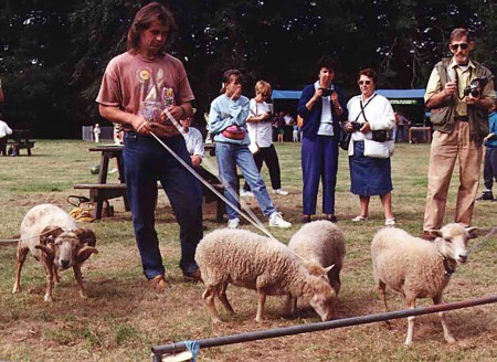 Sheep on a lead! (click the picture for original source)