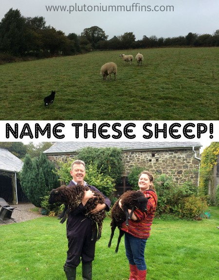 I bet you've never named a sheep before...?