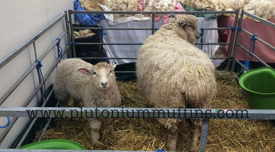 A sheep and her little lamb at Wonderwool Wales.