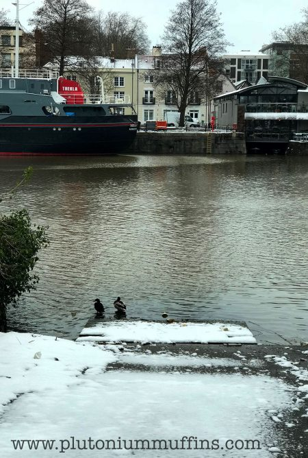 Frozen ducks with Thekla in the background.