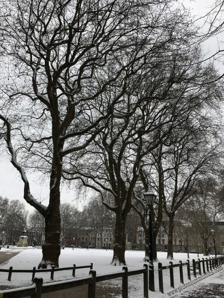 Trees in Queen Square.