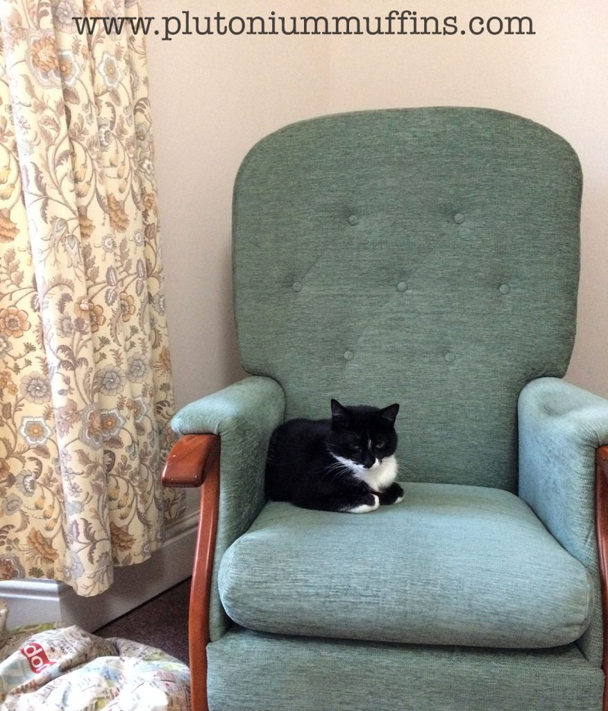 Tonks enjoying our new armchair, accompanied by our delightfully disgusting curtains.