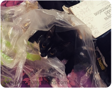 "Tonks - ""didn' choo know kitteh iz recyclehbal?"""
